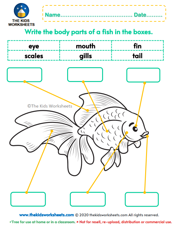 Body Parts Of A Fish Worksheet : The Kids Worksheets